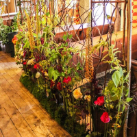 BAFA Flower School-Leeds castle